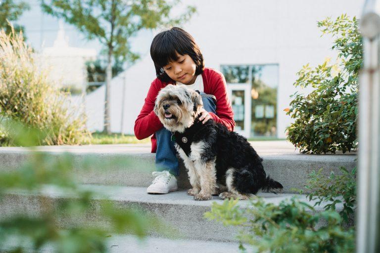12 Ursachen und Symptome von Arthrose bei Ihrem Hund