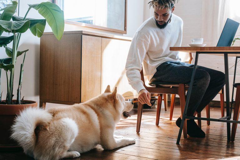 5 Gründe, warum Hunde Sachen kauen